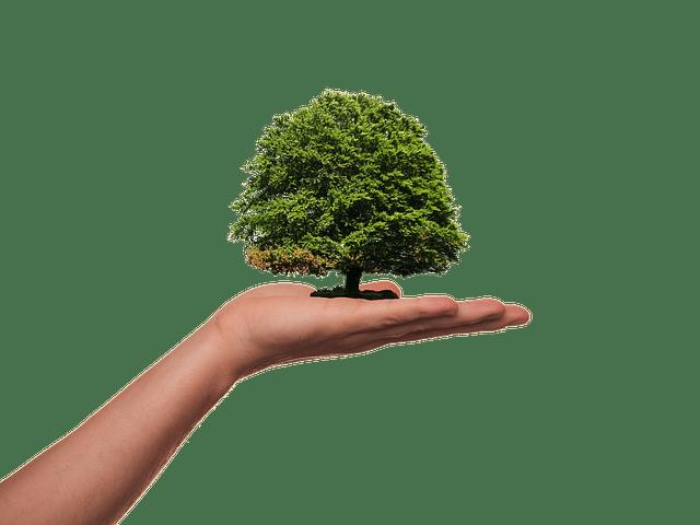 Grüne Aktienfonds: Vorteile und Nachteile