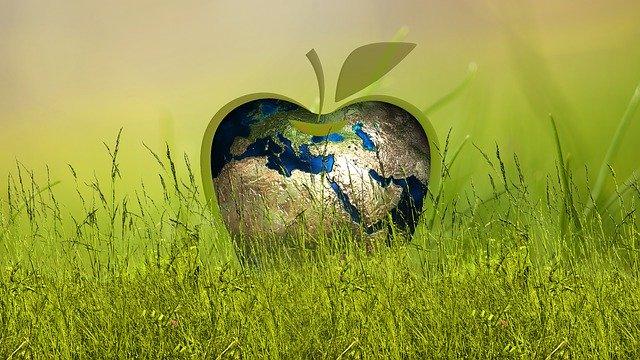 Green Investment: so können Sie ökologisch investieren