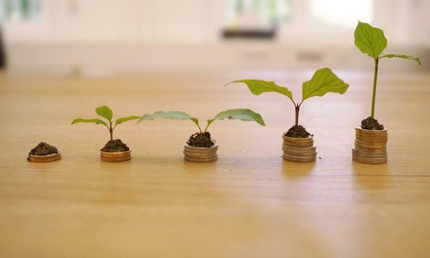 Grüne Geldanlage – Wichtige Marktsignale für ein nachhaltiges Investment